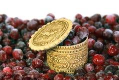 cranberry Royaltyfri Bild