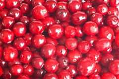 Cranberry Royalty Free Stock Photo
