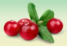 cranberry royaltyfria bilder