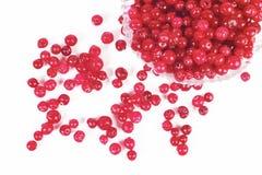 cranberry Obrazy Stock