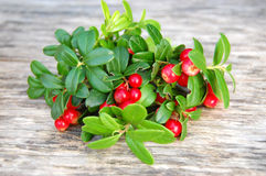 Free Cranberry Stock Photography - 15729262