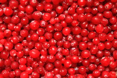 cranberry Royalty Free Stock Photography