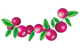 Cranberry. Raster version of vector image of cranberry Stock Photos
