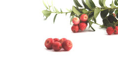 Cranberry. Cowberry Stock Photo