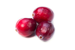 Cranberry Stock Images