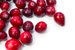 Cranberry Royalty Free Stock Image