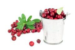 Cranberry Zdjęcie Royalty Free