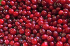 Cranberry. Royalty Free Stock Images