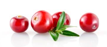 Cranberry fotografia stock