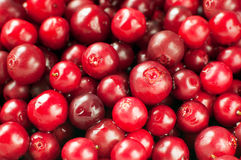 cranberry Imagem de Stock Royalty Free