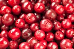 cranberry Imagem de Stock Royalty Free