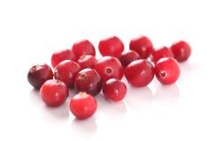 cranberry royaltyfri fotografi