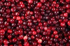 cranberry Foto de Stock