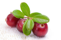 cranberry Foto de Stock Royalty Free