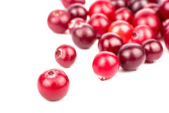cranberry royaltyfria foton