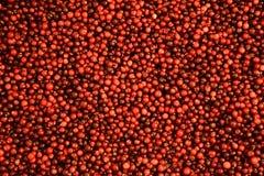 cranberry royalty-vrije stock foto