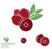 cranberry vektor illustrationer