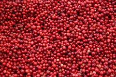 cranberry στοκ φωτογραφία