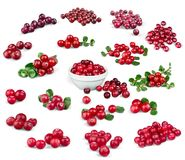 cranberry royaltyfria bilder