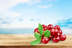 cranberry stock fotografie