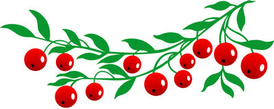 Cranberry. Vector illustration of the red Cranberry, Isolated Stock Photography