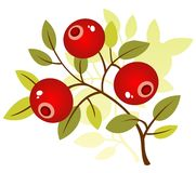 Cranberry Royalty Free Stock Images