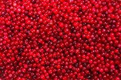 cranberry Amerikaanse veenbessen op glay Plaat Houten Achtergrond stock foto