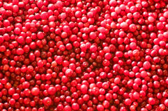 Cranberry backdrop Stock Images