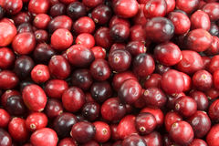 Cranberry background. Red cranberries as a background stock photos