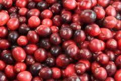 Cranberry background Stock Photos