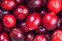 Cranberry background. Big red cranberries macro background Royalty Free Stock Images