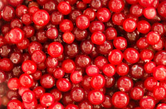 Cranberry Background Royalty Free Stock Photography