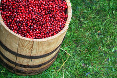 Cranberry in barrel Stock Photography
