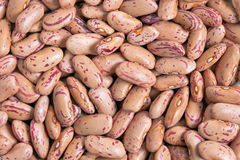 Cranberry Bean stock image