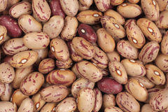 Cranberry beans Royalty Free Stock Image