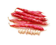 Cranberry Beans. Group of cranberry beans and seeds, isolated on white background Royalty Free Stock Photos