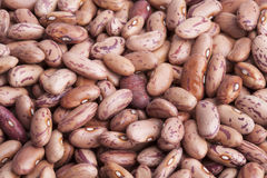 CRANBERRY BEANS. A big pile of cranberry beans Royalty Free Stock Photography