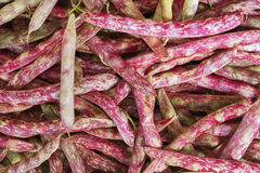 Cranberry Beans Stock Photos