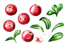 Free Cranberry Berries And Leaves Set. Hand Drawn Watercolor Illustration, Isolated On White Background. Stock Image - 117288531