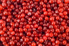 Cranberry berry. Cranberry vegetable berry nature background Stock Photography