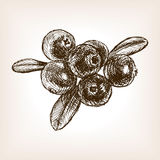 Cranberry berry fruit hand drawn sketch vector Royalty Free Stock Photography