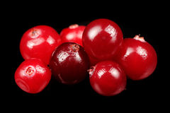 Cranberry on Black Background Stock Image