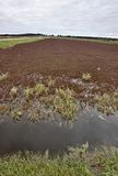 Cranberry Bog. Wisconsin field USA juice and jam and spread royalty free stock photography