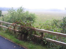 Cranberry bog on misty morning. Cranberry bog along Cape Cod Rail Trail on foggy morning stock photos