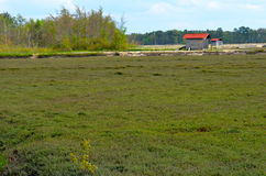Cranberry Bog. A working cranberry bog in spring before blooms or berries form royalty free stock photography