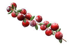 Cranberry branch composition, clipping paths Royalty Free Stock Photo