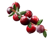 Cranberry branch, paths Royalty Free Stock Photos