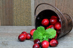 Cranberry. In a bucket with mint leaves Royalty Free Stock Image