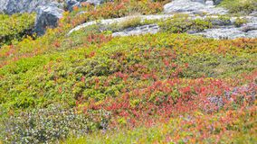 Cranberry Bush, In The High Mountains Stock Photo