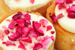 Cranberry cakes Stock Images